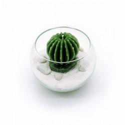 Boccia con cactus